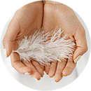 Feather on woman's hands
